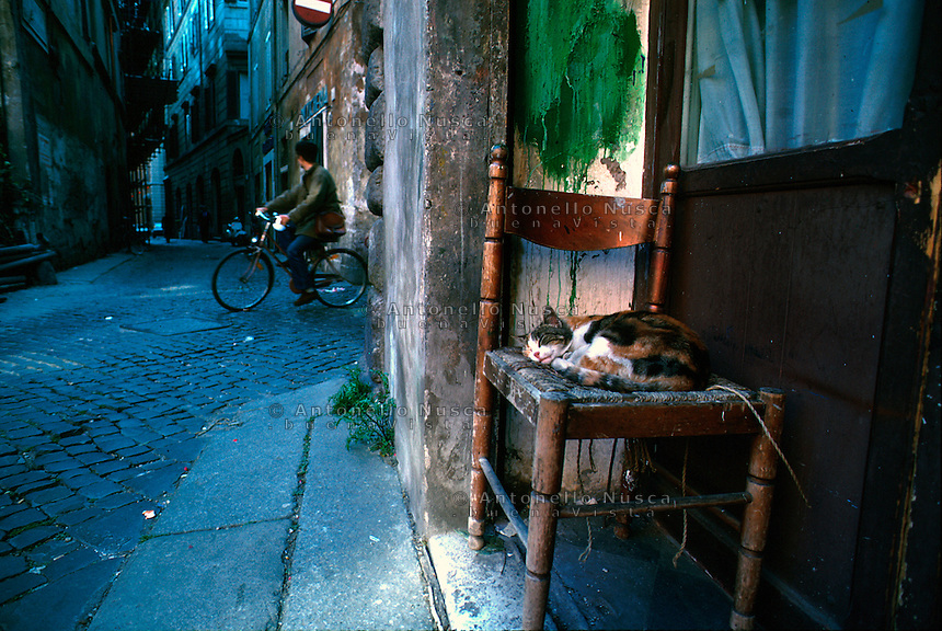 A cat sleeping on a chair at jewish ghetto in Rome.