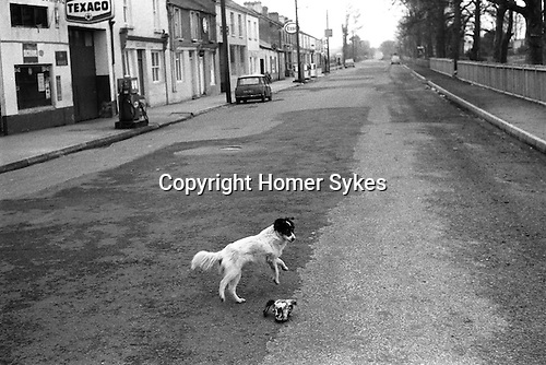 Killorglin Eire Southern Ireland. The dog is afraid of the sheep's skull in the center of the road.1972