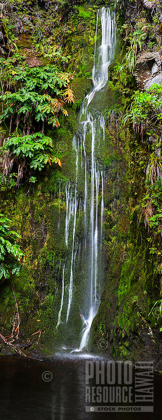 A waterfall deep within the lush forests of Koke'e State Park, Kaua'i.