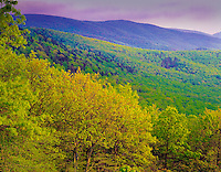 Lush spring greenery, Shenendoah National Park, Virginia  Skyline Drive  Appalachian Mountains