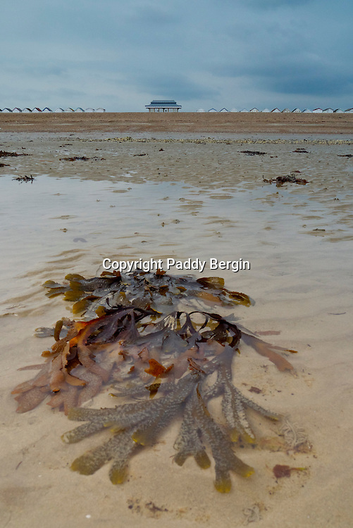 Kelp Seaweed on Worthing Beach with a view of a Pavilion between a row of Beach Huts.<br />