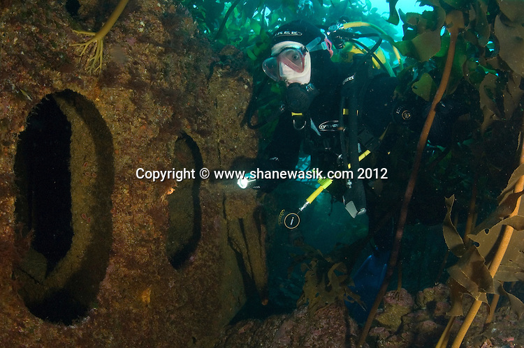 A diver explores the San Benito Wreck at Mayor Island