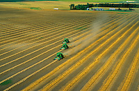 Three combines harvesting rows of swathed wheat in farmers field, aerial view, near Colgate, North Dakota, AGPix_0068