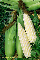 CR06-003c  Corn - Silver Queen variety