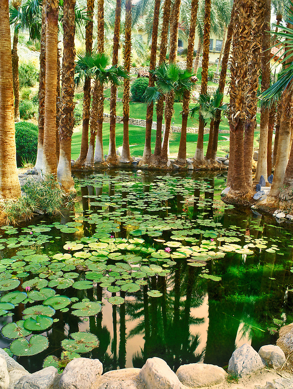 Lily pond in gardens of Furnace Creek Inn. Death Valley National Park, California