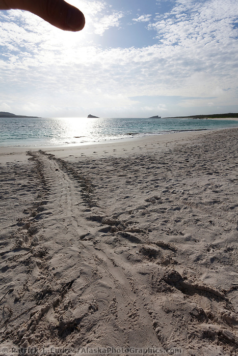 Sea turtle tracks in the san on Gardner beach, Espanola Island, Galapagos Islands, Ecuador.