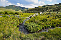 Summer Stream.  Beaverhead Mountains, Idaho
