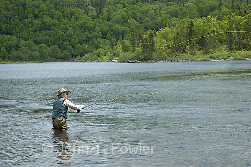 Fly fishing for Atlantic Salmon, Harry's River, Newfoundland