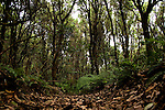 Forest's of the Anaga mountains in the north of Tenerife, Canary Islands,Spain