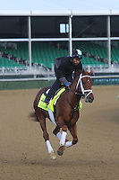 May 1, 2014: Danza gallops in preparation for the Kentucky Derby at Churchill Downs in Louisville, KY. Zoe Metz/ESW/CSM