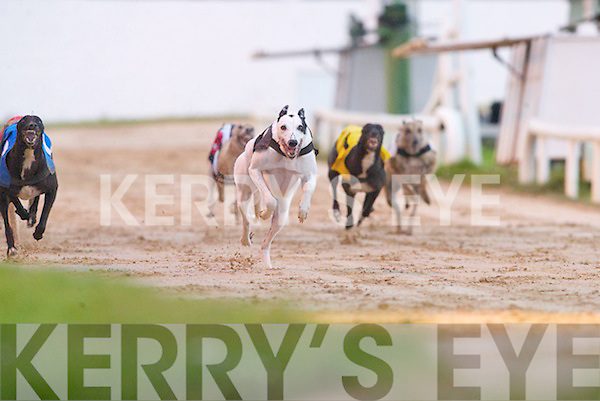 Above: Time to paws? A great win for (No 4) Wise Miller in the Johnny Byrne Duagh & London.Sweepstake Semi-final at the Kingdom Greyhound Stadium Tralee with (No 2) Send it Bell and.(No 1) Clounough Ranger close on his tail..BETS: Placing their bets on the 5th Race at