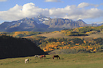 Horses grazing in front of Wilson Peak, San Juan Mountains near Telluride, Colorado, USA.