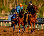 October 30, 2019: Breeders' Cup Filly & Mare Turf entrant Fanny Logan, trained by John H.M. Gosden, exercises in preparation for the Breeders' Cup World Championships at Santa Anita Park in Arcadia, California on October 30, 2019. Scott Serio/Eclipse Sportswire/Breeders' Cup/CSM
