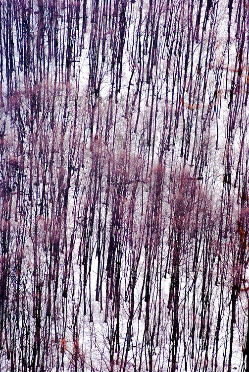 Oltrepò Pavese, alberi spogli --- <br /> Oltrepò Pavese, leafless trees
