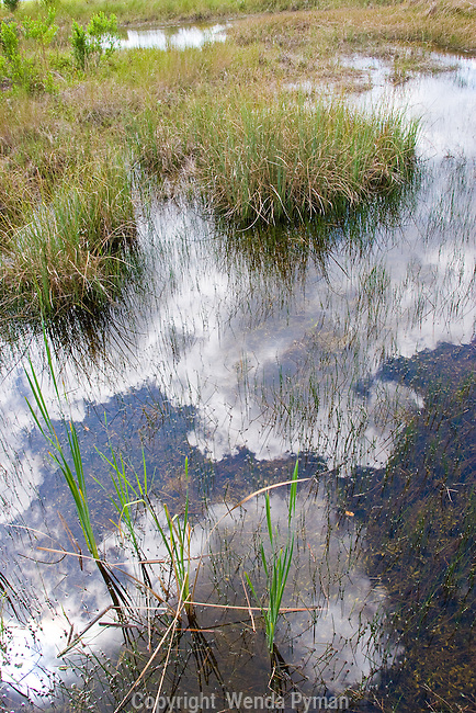 Clouds are reflected in the islands of grass in the Everglades.