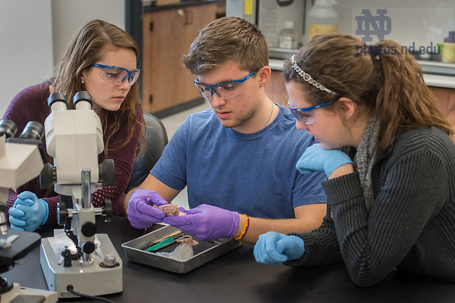 Jan. 28, 2015; Undergraduate neuroscience lab. (Photo by Matt Cashore/University of Notre Dame)