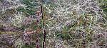 USA, Oregon, Fort Stevens State Park, intricate forest scenics near Crabapple Lake