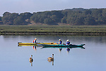 Brown pelicans and kayakers at Elkhorn Slough