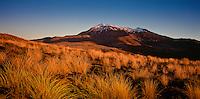 Mt Ruapehu and Tussock at sunset,Tongariro National Park