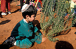 Israel, tree planting on Tu B'shvat holiday