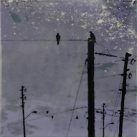 Encaustic painting with photography of crows on power poles with satellite image of earth at night