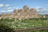 Hay stacks in field, Yorkshire, England.