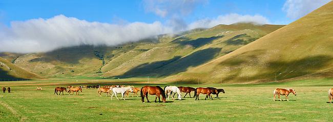 Horses on the Piano Grande, Great Plain, of Castelluccio di Norcia, Parco Nazionale dei Monti Sibillini , Apennine Mountains,  Umbria, Italy.