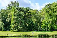 France, Indre-et-Loire (37), Azay-le-Rideau, parc et château d'Azay-le-Rideau au printemps, cèdre du Liban