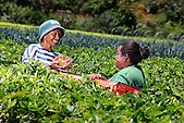 """Ouvriers agricoles du """"Jardin calédonien"""" à Dumbéa"""