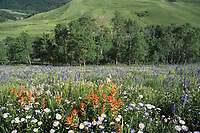 Wildflowers near Crested Butte