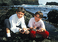 Two little boys showing off their discoveries while tide pooling, Mendocino, California