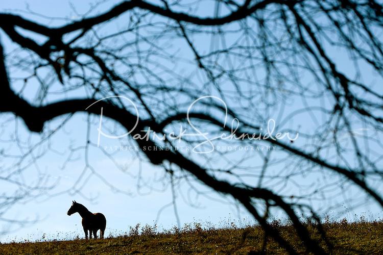 Horses roam in the mountains of North Carolina near Junaluska.