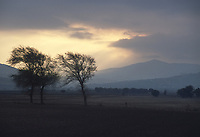 - paesaggio agricolo nei pressi di S.Severo (Foggia)<br /> <br /> - agricultural landscape near S.Severo (Foggia)
