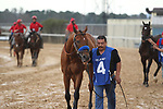 HOT SPRINGS, AR - FEBRUARY 19: Mourinho #4, with before the running of the Southwest Stakes at Oaklawn Park on February 19, 2018 in Hot Springs, Arkansas. (Photo by Justin Manning/Eclipse Sportswire/Getty Images)