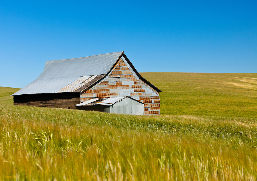 An old barn sitting in the middle of a wheat field in Eastern Washington.