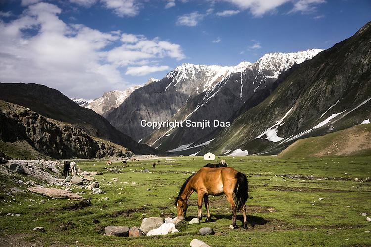 Green pastures enroute to Ladakh