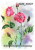 Kris, FLOWERS, BLUMEN, FLORES, paintings+++++,PLKKK3537,#f#, EVERYDAY