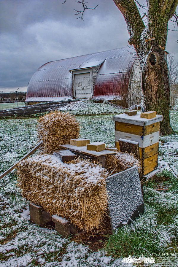 Bee hives wrapped in protective covering to protect bees during the winter.