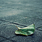 A leaf in the street with water droplets on frosty ground
