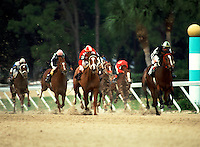 Thoroughbred racing at Tampa Bay Downs, FL