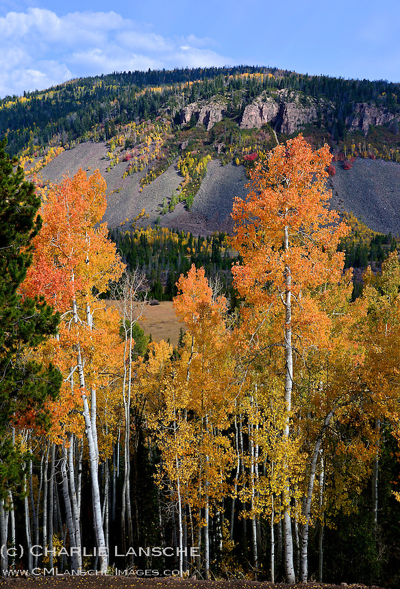 Turning aspen near Soapstone Basin.  Uinta Mountains, Utah.  September 2012.