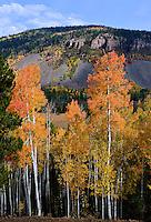 Turning aspen near Soapstone Basin.  Uinta Mountains, Utah.  September 2012.