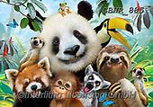 Howard, SELFIES, paintings+++++,GBHR885,#Selfies#, EVERYDAY ,panda,pandas