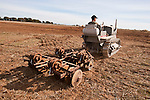 Antique tractors plowing a field in fall during the Branch 158 EDGE & TA Fall Plow Day and Plowing Seminar near Pleasant Grove, Calif...Silmer Scheidel Farm..1931 Caterpillar Ten with disc harrow