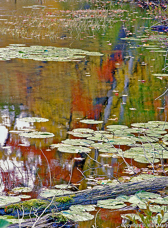 """""""FALL REFLECTIONS along a WISCONSIN POND """".  Reflection along a Pond edge in Northern Wisconsin"""""""