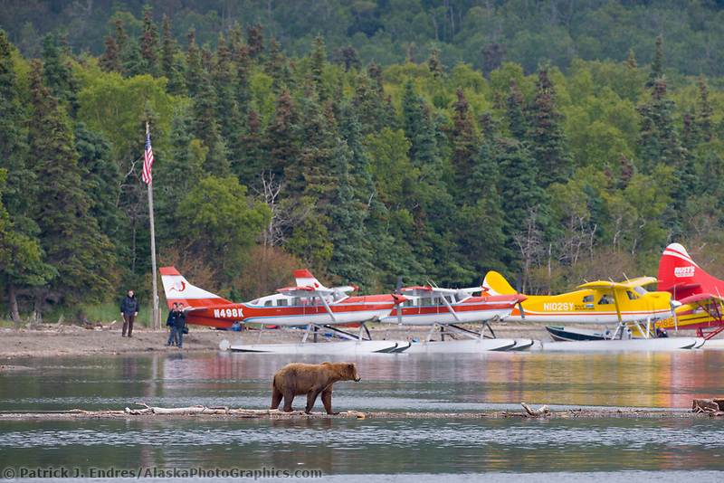 Tourists view bears by float planes at the shore of Naknek Lake, Brooks Lodge, Katmai National Park, Alaska