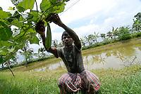 INDIA Westbengal , Sundarbans, Sagar Island , project for Preparedness of Natural Disaster and climate change , landshaping, water pond for fish breeding and irrigation and field with upper level as protection from salinization and floods / INDIEN Westbengalen Sunderbans , Sagar Island , Projekt zur Vorbereitung auf Naturkatastrophen und Anpassung an den Klimawandel, land shaping: Anlage von Teichen zur Bewaesserung fuer Gemueseanbau  und Fischzucht sowie hoeher gelegte Felder als Schutz vor Versalzung bei Ueberflutung, Farmer Bhajahari Patra im Dorf Mahishamari