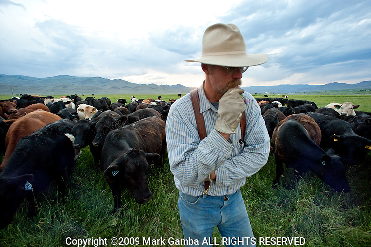 Glenn Elzinga on his Ranch on the Pahsimeroi River is growing organic beef and working in conjunction with Idaho Fish and Wildlife, USBWP and the Nature Conservancy to return the rich spawning grounds to their original productivity.