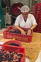 Europe/France/Midi-Pyrénées/31/Haute-Garonne/Toulouse: Confiserie - Fabrication des violettes de Toulouse à la Société Candiflor [Non destiné à un usage publicitaire - Not intended for an advertising use]