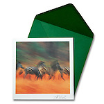 Burchell's Zebra<br />